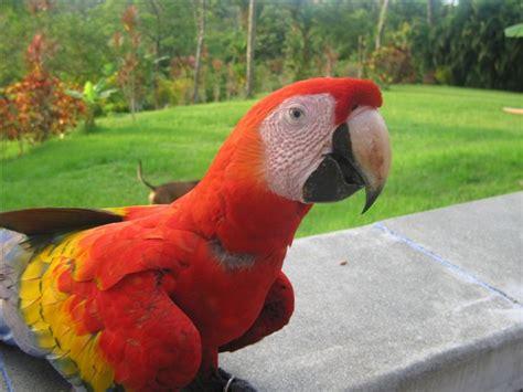 imagenes de animales vertebrados aves aves en peligro de extincion las clases de aves