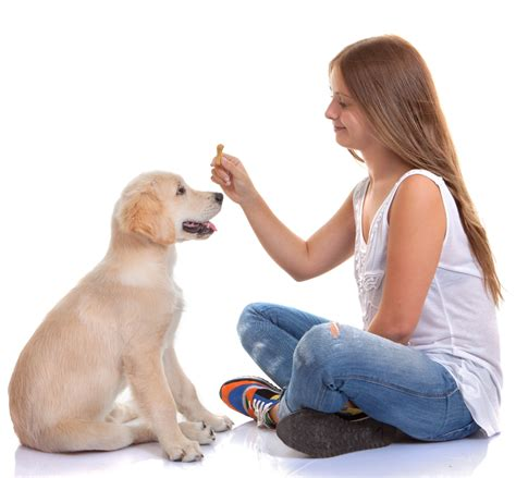 dog house training methods helpful tips and techniques to train your dog