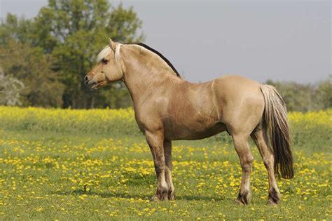 fjord quizlet welk paardenras past het best bij jou uitkomsten