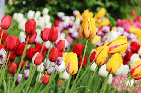 popular spring flowers america s best spring flower festivals fodors travel guide