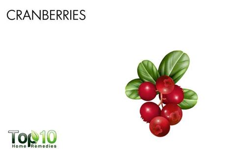 are cranberries for dogs home remedies for bladder infections in dogs top 10 home remedies