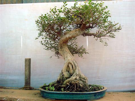 how to make a fake tree how to make an artificial bonsai tree