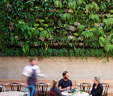 paps vertical garden greenwall system perth