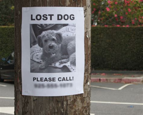 lost puppies some tips to help find lost pets guardian pet sitters