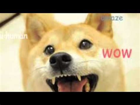 Original Doge Meme - doge original picture www pixshark com images