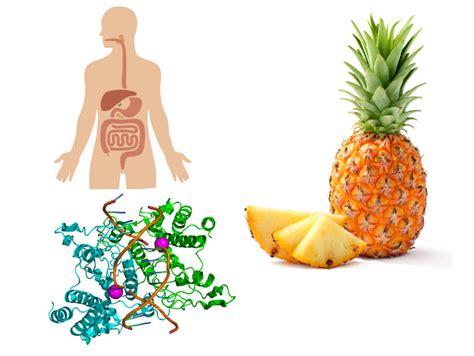alimentazione crudista enzimi salute intestinale nutrizione e crudismo il