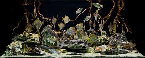 aquarium design group videos aquarium design group a brackish hardscape gothic feel