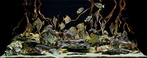 aquarium design group hardscape aquarium design group a brackish hardscape gothic feel