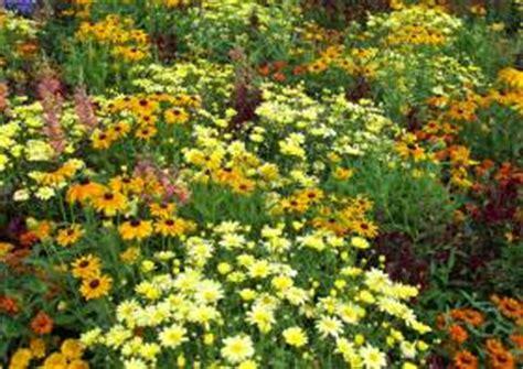Pflanzen Für Den Vorgarten 901 by Blumenrabatten F 252 R Garten Und Vorgarten Gestaltung Blumen