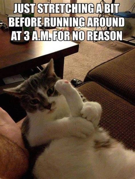 Popular Cat Memes - 37 of the best cat memes the internet has ever made