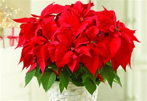 best indoor flower plants best indoor flowers and plants for the winter petal talk