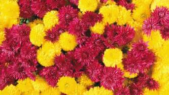 Hd Images Of Flowers 25 Free Hd Flowers Wallpapers