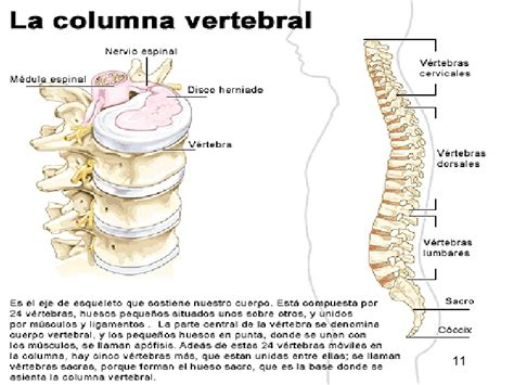 libro la columna de la huesos