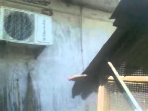 Ac Sharp Di Palembang cuci ac palembang l cuci outdoor ac di kandang burung