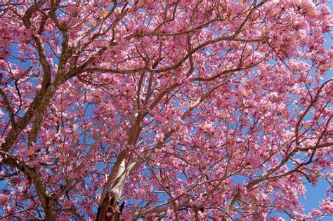 pretty tree by nastynathan photo weather underground