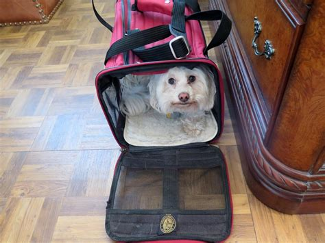 Pet Carrier Pet Cargo Size S dogs us and we them tips for air travel with pets