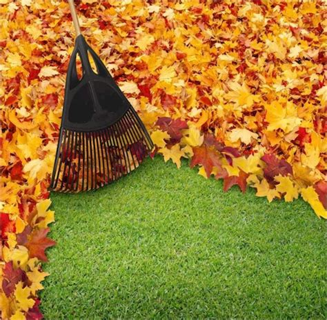 fall cleanup landscaping outdoor goods