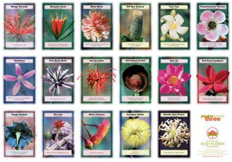 fiori australiani elenco fiori australiani australian bush flower essences