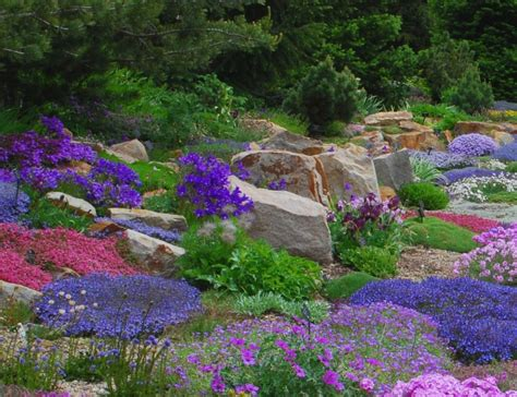 rock garden perennials alpine perennials the rock garden
