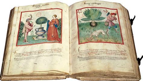 lisabetta e il vaso di basilico the basil of salerno and lisabetta s tears do bianchi