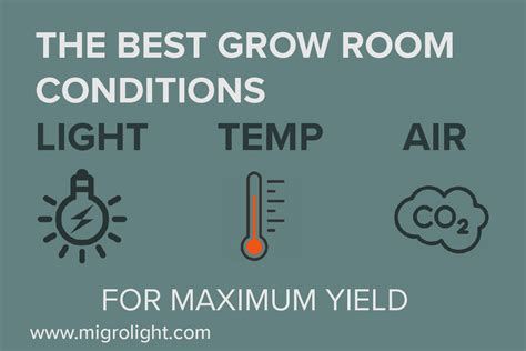 grow room temp best grow room conditions for maximum yield temperature light co2