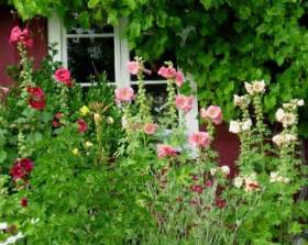 Traditional Cottage Garden Flowers Traditional Cottage Garden Flowers