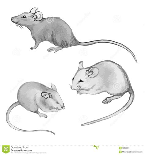 rats mice pencil drawing by hand set stock vector