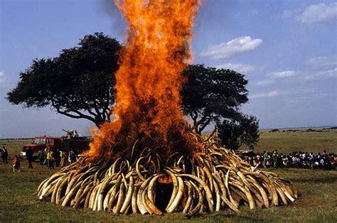 Destroying Ivory to Save Elephants – WildlifeSNPits