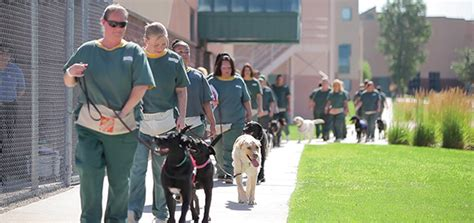 prison dogs saving lives while serving time modern magazine