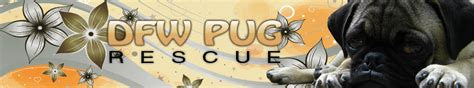 dfw pug rescue top ten pugs to a pizza with from dfw pug rescue