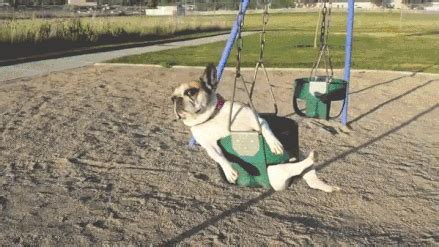 swing gif swing gifs find on giphy