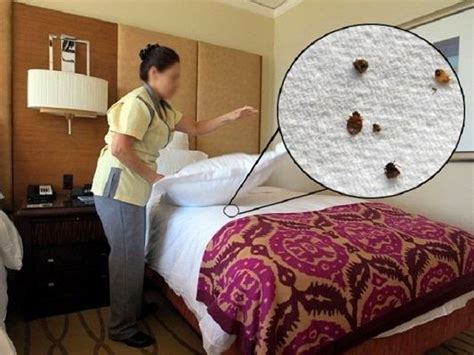 hotel bed bugs bed bug bites get rid of bed bugs pictures treatment