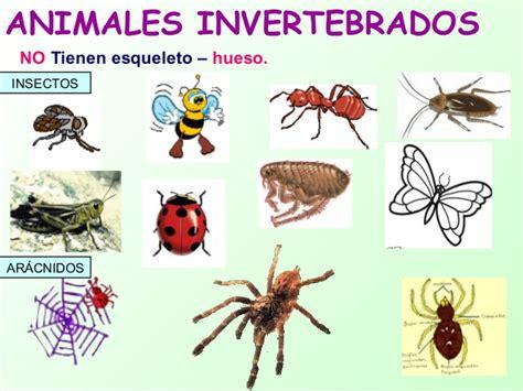 imagenes animales invertebrados animales vertebrados e invertebrados cristyna