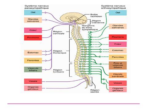 tesis adalah dan contohnya 7 kelainan pada sistem saraf katumbu