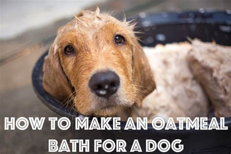 oatmeal bath for dogs oatmeal baths are great for when your is itchy pet grooming