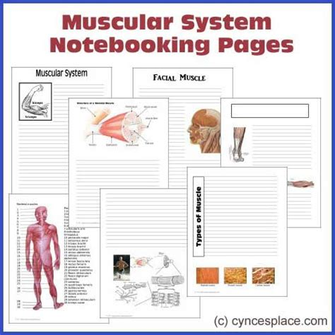anatomy coloring book mccann eric wise anatomy notebooking pages muscular system with
