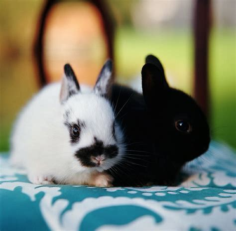 baby bunnies in backyard 17 best images about cute baby bunny on pinterest cute