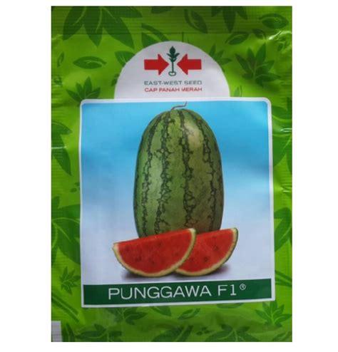 Benih Buah Semangka Manis Tanpa Biji Eceran Mudah Tumbuh Dan Cocok Di benih panah merah semangka punggawa f1 80 biji jual tanaman hias