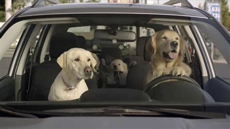 industrial puppy subaru commercial html autos post