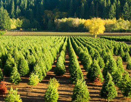 mississippi christmas tree farm 17 best images about eco friendly ideas on trees gift wrapping