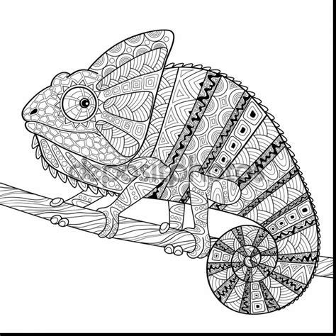 chameleon coloring page chameleon coloring pages printable printable coloring page