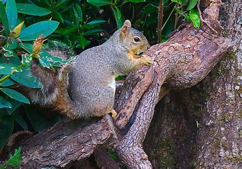 17 best images about squirrels and birds in the back yard