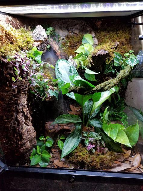 vivarium good setup  crested gecko crestedgecko