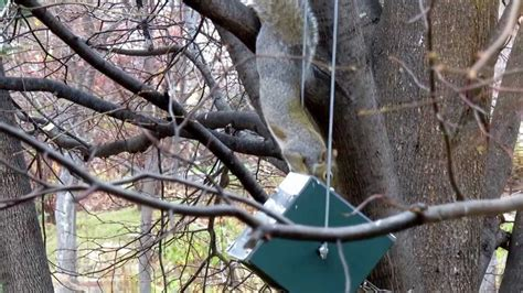 a squirrel spin flip on squirrel proof bird feeder usa