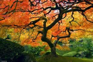 garden canopy tree