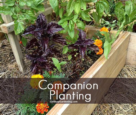 Companion Gardening by Companion Planting