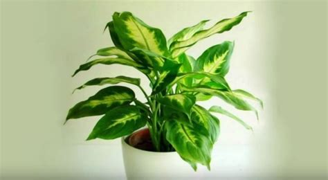 plants to keep in bathroom 10 air cleaning houseplants diy craft projects