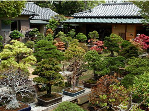 giardini bonsai bonsai questo piccolo grande banzai