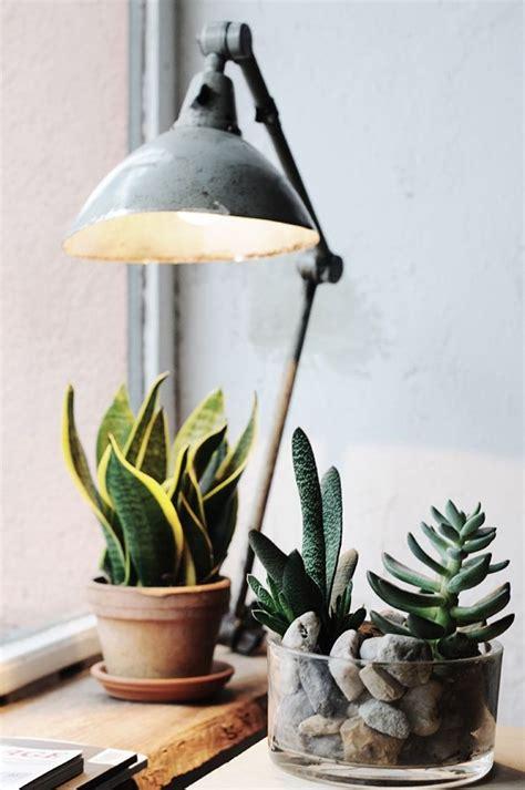 ideas  decorate desks  succulent pretty designs