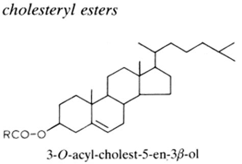 esteres de colesterol metabolism of low density lipoproteins ldl the